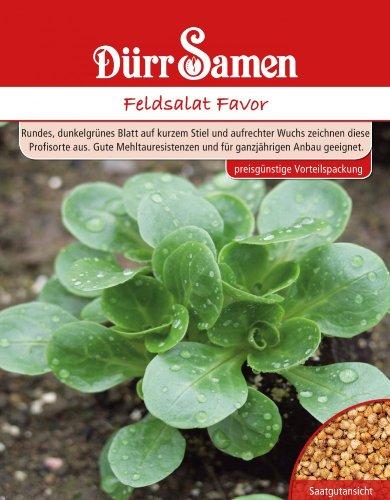 Feldsalat Favor - Dürr Samen