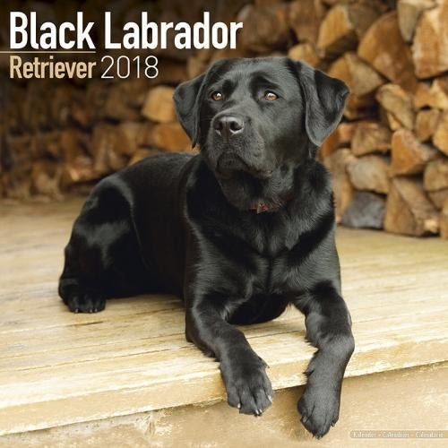Black Labrador Calendars - Black Lab Calendar - Black Labrador Retriever Calendar - Dog Breed Calendars 2018 - Dog Calendar - Calendars 2017 - 2018 wall calendars - 16 Month Wall Calendar by Avonside