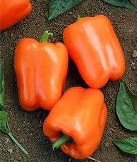 Best orange blaze pepper plant Reviews