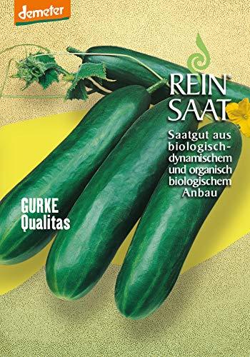 Reinsaat Gu19 Kastengurke Qualitas (Bio-Gurkensamen)