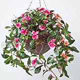 Homescapes White, Orange and Pink Artificial Hanging Basket Large Lifelike Hanging Plant For Indoor and Outdoor Decoration Trailing Flowers In Brown Wicker Pot with Metal Chain and Hook 85 cm Long