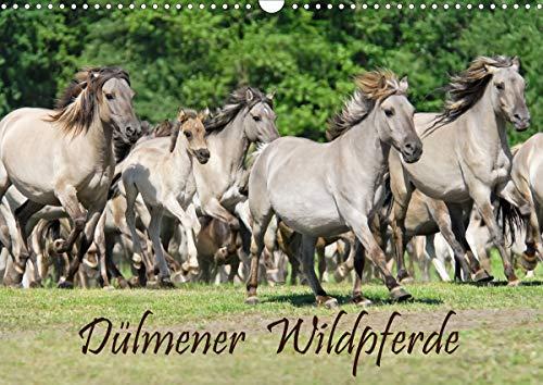 Dülmener Wildpferde (Wandkalender 2021 DIN A3 quer)