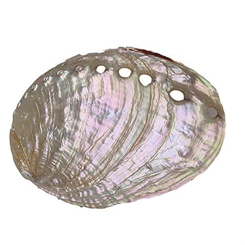 TL TONGLING Conchas 12 cm Blanco Abalone Shell Vida Marina Inicio Boda...
