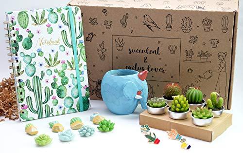 I succ I'm sorry Succulent Gift Box