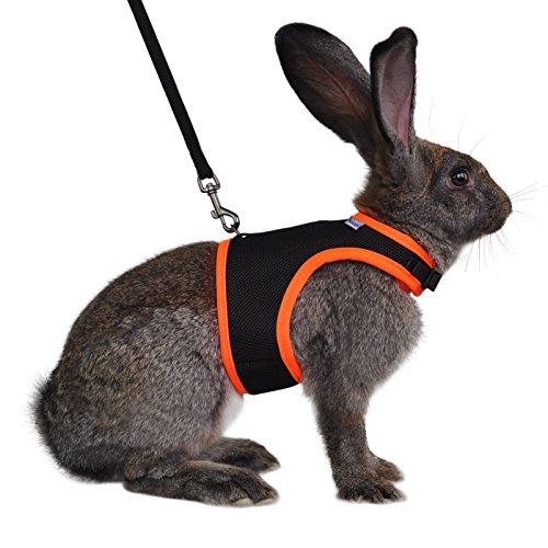 Niteangel Adjustable and Breathable Mesh Harness with Lead for Rabbit (S, Black)