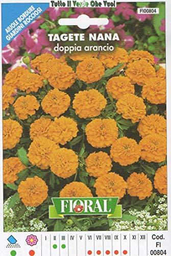 AGROBITS Tage Nana Arancio - AIUOLE Bordure Giardini ROCCIOSI-Floral - A SEMENTI