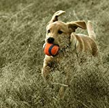 Chuckit! Ultra Ball Medium 2-er Pack - 9