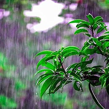 The Calm Compilation: Zen Rain Recordings