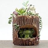 OULII Carino verde rana fiore Sedum succulente Pot fioriera Bonsai trogolo casella pianta Bed Garden Home Office scrivania Pot Decor