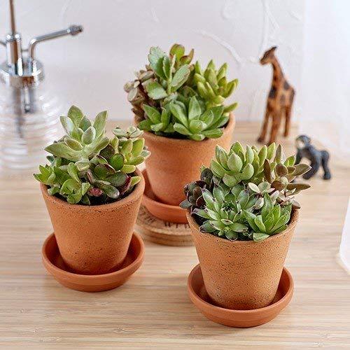 日比谷花壇 多肉植物 「寄せ植え3個セット」
