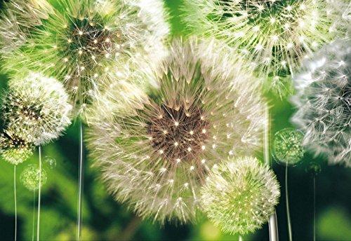 DekoShop Fototapete Vlies Tapete Moderne Wanddeko Wandtapete Pusteblumen mit Grünen Hintergrund AMD10221V8 V8 (368cm. x 254cm.) Natur, Wald, Blumen