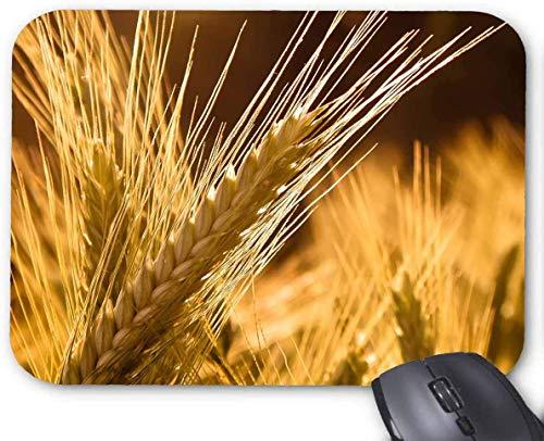 Pflanzen Natur Weizen Maus Pad