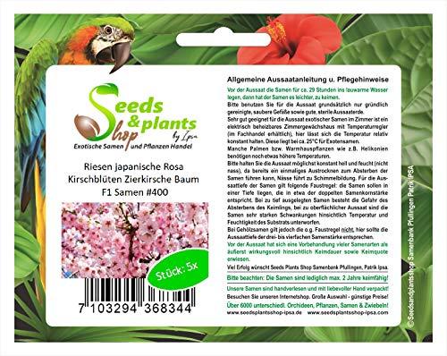 Stk - 5x Riesen japanische Rosa Kirschblüten Zierkirsche Baum F1 Samen #400 - Seeds Plants Shop Samenbank Pfullingen Patrik Ipsa