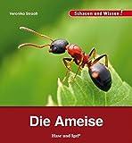 Die Ameise: Schauen und Wissen!