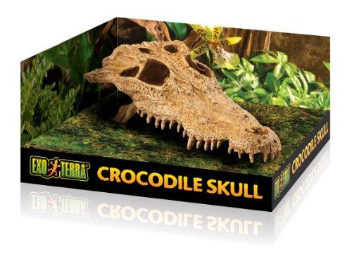 Exo Terra Krokodilschädel - 4