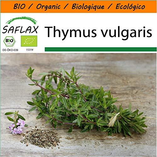 SAFLAX - Jardin dans le sac - BIO - Thym - 800 graines - Avec substrat de culture dans un sac de levage facile à manipuler. - Thymus vulgaris