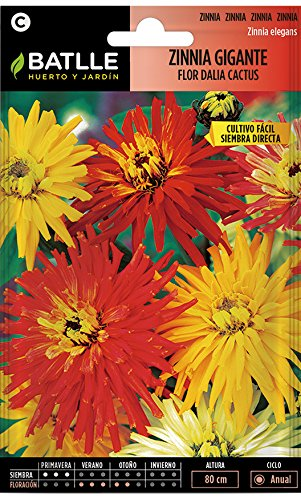 Semillas de Flores - Zinnia Gigante Flor de Cactus variada - Batlle