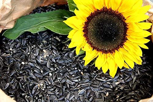 Futterbauer 20 kg Sonnenblumenkerne schwarz Vogelfutter Ganzjahresvogelfutter