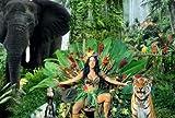 24x7 Poster Katy Perry Roar Hintergrund Poster 30,5 x 45,7
