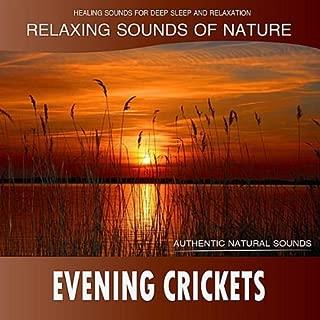 Best crickets noise mp3 Reviews