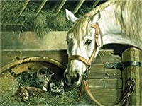 DIY 数字 油絵 塗り絵 キット 大人 子ども 塗り絵 白馬と猫 デジタル油絵 手塗り 数字キットによる絵画 絵かき インテリア 壁飾り ホームデコレーション 40x50cm(額縁なし)