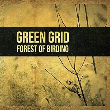 Forest of Birding