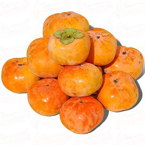 愛媛県産 次郎柿 約 4.5kg L 2L サイズ おまかせ 宇和島 柿 原 じろうがき 栄養満点 秋の味覚 カキ 箱買い 4.5キロ