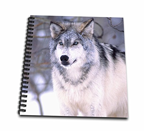3dRose DB 83899 _ 2 Timber Wolf, Canis Lupus – NA02 dno0319 – David Northcott – Memory Book, 12 von 12 Zoll