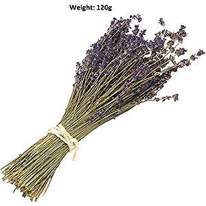Ramo de flores secas naturales de lavanda – Ramo de lavanda recién cosechado, morado, decoración para bodas…