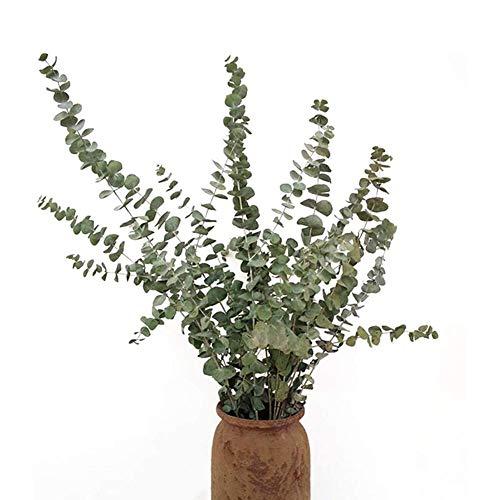 funnyfeng Trockenblumenstrauß, 10 Stück Bündel Nordischen Eukalyptus Nordische Getrocknete Blumensträngee Eukalyptusblätter, Natürliche Luftgetrocknete Echte Blumen Home Decoration Ornamente