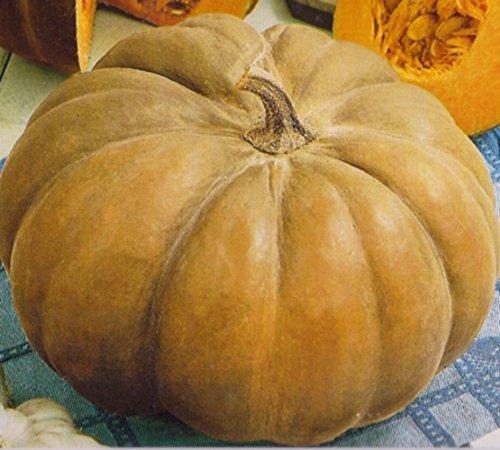 Kürbis Speisekürbis Muscat de Provence Samen