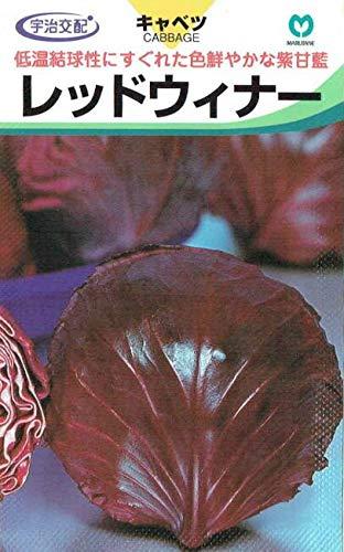 丸種 紫キャベツ レッドウィナー