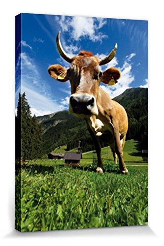 1art1 Kühe - Kuh Auf Der ALM Bilder Leinwand-Bild Auf Keilrahmen | XXL-Wandbild Poster Kunstdruck Als Leinwandbild 120 x 80 cm