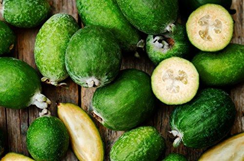 ALBERO DI FEIJOA TROPICALE - pianta da frutto da esterno vera