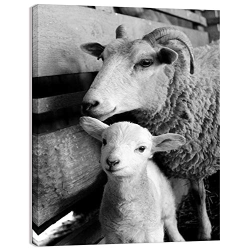 Welmeco Black and White Animals Canvas Wall Decor Art Cute Little Sheep Lamb Picture Prints Framed and Stretched Farmhouse Poster for Home Living Room Decoration