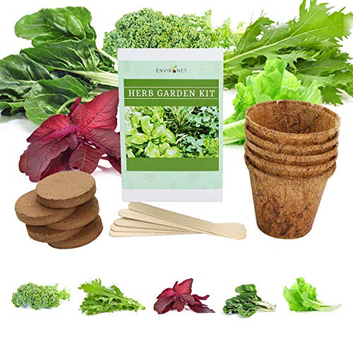 Environet Vegetable Garden Kit. Seed Starter Kit Indoor. Grow 5 Different Salad Vegetables - Kale, Mustard mizuna, red Amaranth, Chard, Lettuce from Seeds at Home. Creative Gardening Gifts