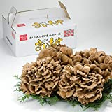 いちまさ まいたけ 舞茸 4株 約1.5kg 無農薬 大きな株 食べ応え抜群 冷凍保存可 和洋中どの料理にも 一正蒲鉾