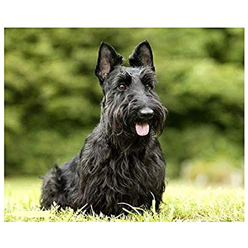 DIY 5D Diamond Painting by Number Kits,Full Drill Round Scottish Terrier Dog Pet Patterns Embroidery Cross Stitch Mosaic Arts for Home Wall Decoration Gift (15.7x19.7inch)