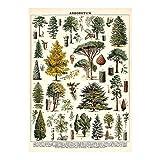 Cavallini Decorative Wrap Poster, Arboretum, 20 x 28 inch