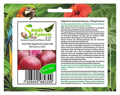 Stk - 250x Rote Rübe Ägyptische plattrunde EKO - Rübensamen Gemüse Garten K391 - Seeds Plants Shop Samenbank Pfullingen Patrik Ipsa