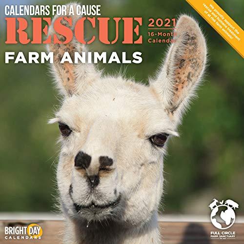 2021 Rescue Farm Animals Wall Calendar by Bright Day  12 x 12 Inch  Cute Calendars for a Cause