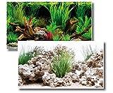 Amtra Deko Fotorückwand Wonder beidseitig Bedruckt in verschiedenen Größen 2in1 Rückwandposter Dekoration Aquarium Rückwand, Fotorückwand Wonder:150x60cm