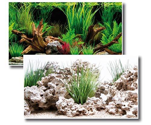 Amtra Deko Fotorückwand Wonder beidseitig Bedruckt 150x60cm 2in1 Rückwandposter Rückwand Folie Aquarien Poster Foto Folien