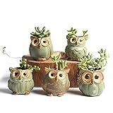 pin sijia Juego de 5 macetas con forma de búho de dibujos animados para plantas suculentas, plantas carnosas, pequeño jarrón de cerámica para hogar/jardín