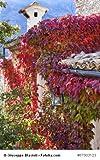 Jungfernrebe Wilder Wein Parthenocissus quinquefolia 10 Samen frosthart