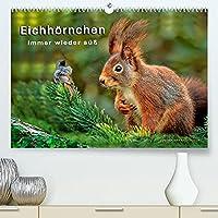 Eichhoernchen - immer wieder suess (Premium, hochwertiger DIN A2 Wandkalender 2022, Kunstdruck in Hochglanz): Eichhoernchen - flinke kleine Kobolde in Wald und Park. (Monatskalender, 14 Seiten )