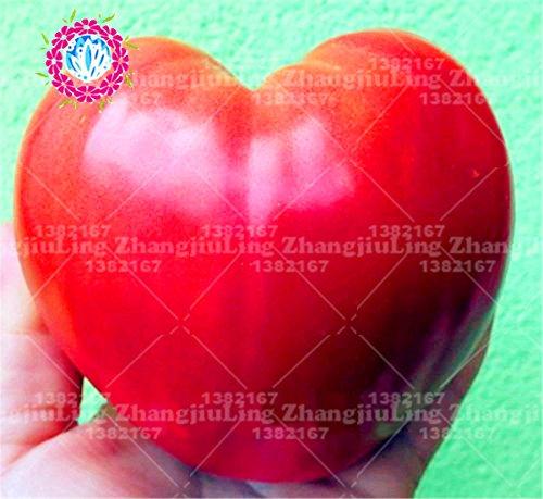 200pcs Graines beefsteak coeur géant tomate Volove Sertse Chervonyy Bulls coeur rouge Heirloom nourriture plante sain en plein air