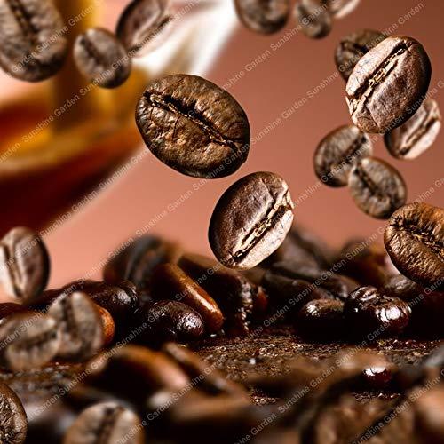 HONIC 30pcs Kaffeebohnen Bonsai Kirsche arabischen Kakao mit Aroma Frische gesunde natürliche Blumen-Garten seltene Tropische essbare Pflanze