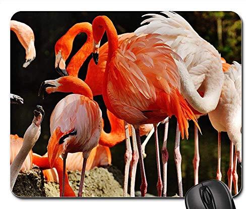 Mousepad Flamingos Vögel Bunte Tierpark Hellabrunn München Tastatur Standardgröße Mausmatte Rutschfeste Computer Büro Gedruckte Diy Schreibtisch Laptop Spielmatte Mauspads Gummiti