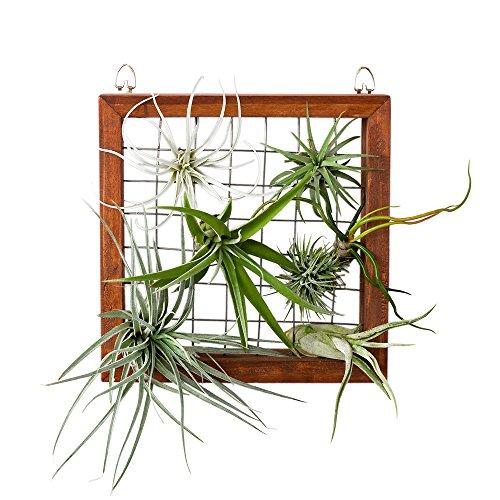 Mkono Air Plant Frame Hanging Airplant Holder Tillandsia Display Hanger Wooden Shelf Wall Decor for House Plants, Succulent, 8″